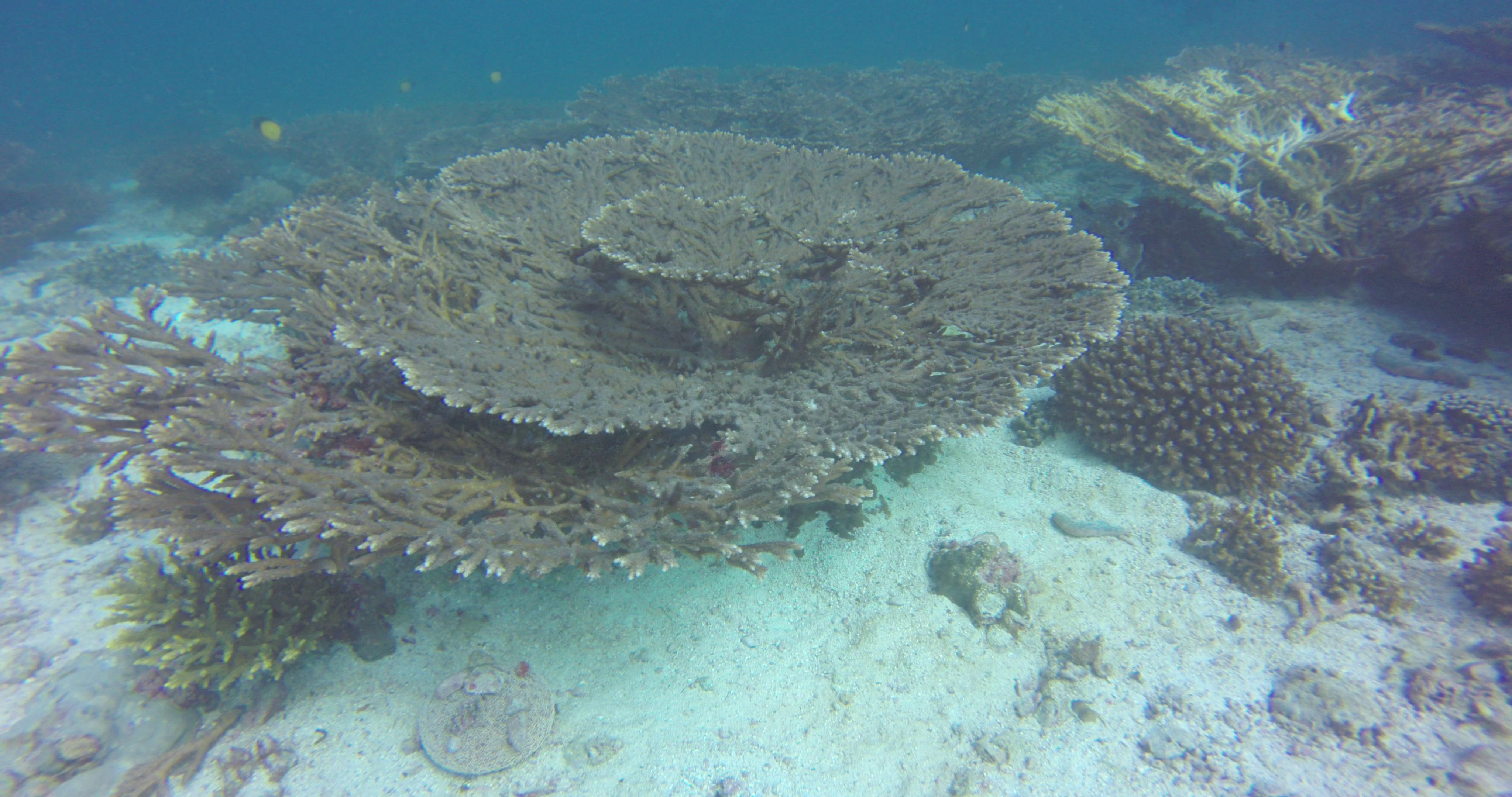 Fabulous Corals !